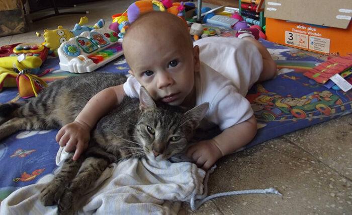 A legtöbb cicát a végtelenségig lehet nyúzni