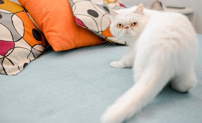 Előfordulhat, hogy az ágyunkat választja a cica macska wc-nek